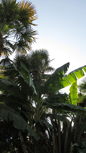 English Bay's pop-up tropical palm trees and garden thanks to Vancouver City gardeners