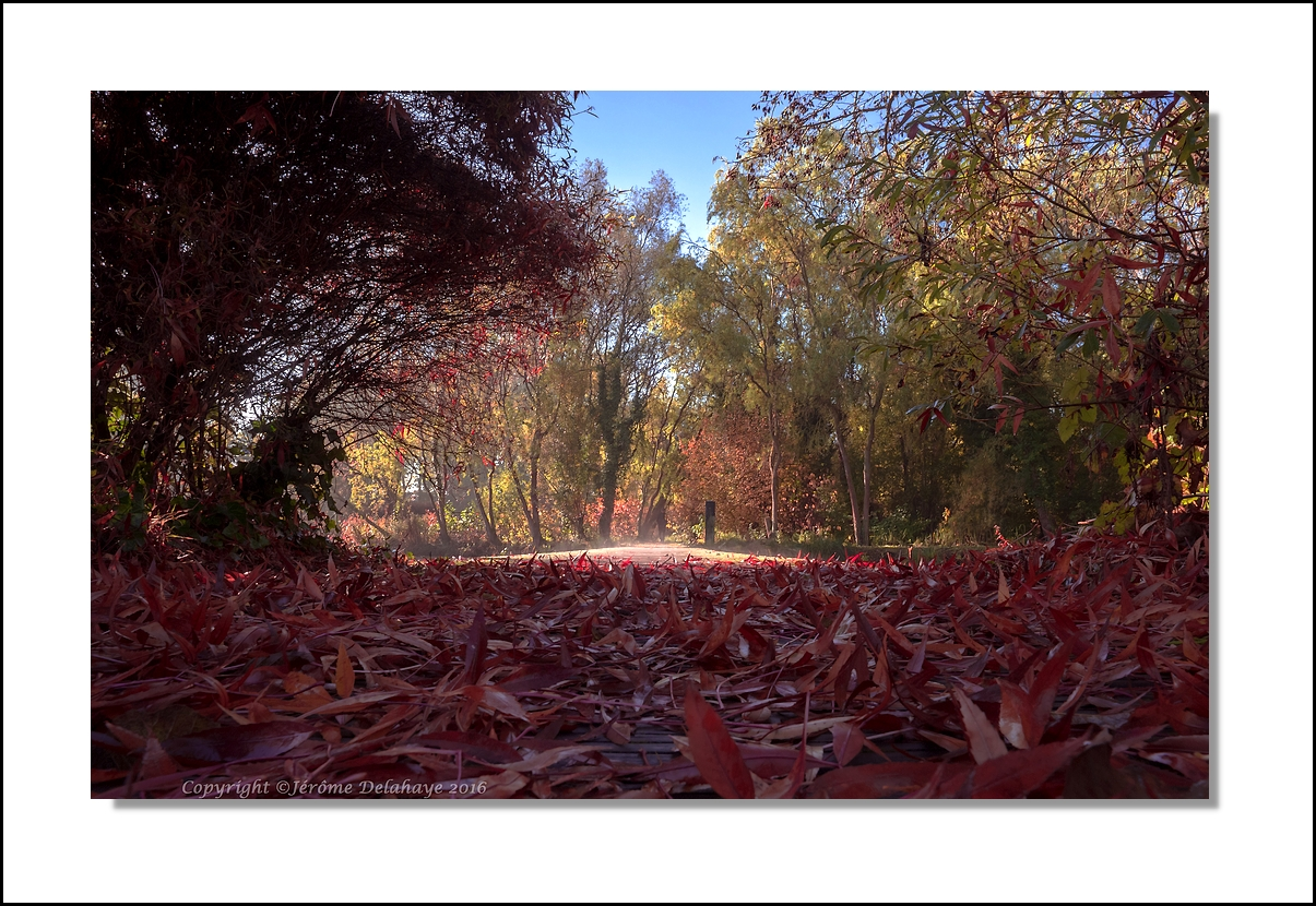 Rêverie d'automne +1 30178250184_fb32b4b1f0_o