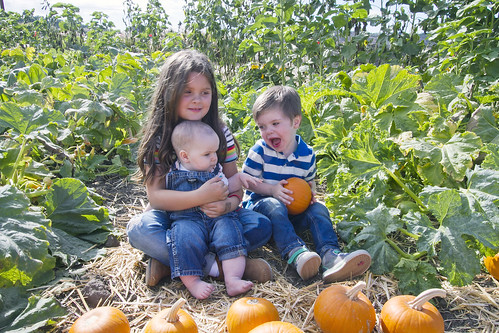 let me tell you why pumpkins rule | by The Spohrs Are Multiplying...