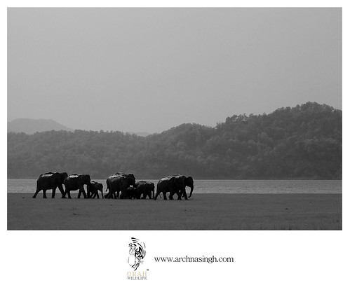 Wild India | by Archna Singh Photography and Design Studio