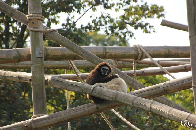 Tierpark Friedrichsfelde 25.09.1649