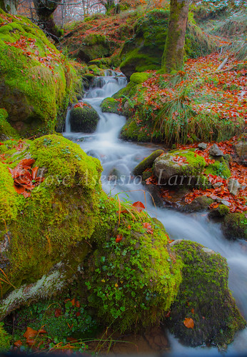 Parque Natural de #Gorbeia #DePaseoConLarri #Flickr      -1946