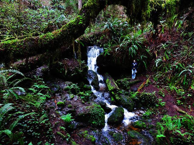 Trillium Falls, Prairie Creek Redwoods State Park, CA, USA