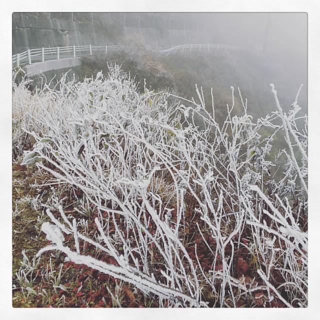 「霧氷が続く道」 #霧氷 #ufoライン
