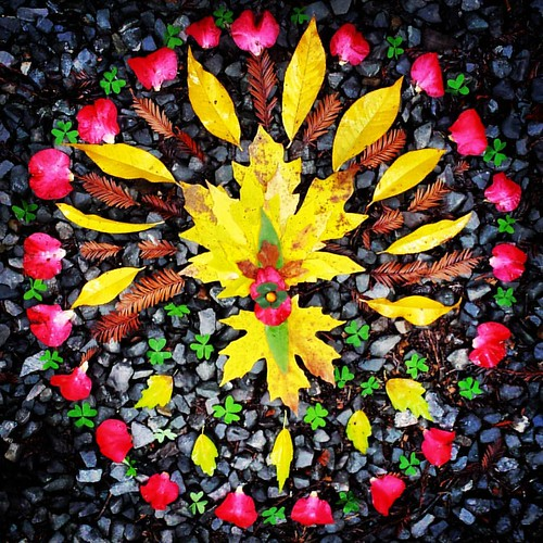 Garden Mandala No. 84 Thankful #autumn🍁 #mandala #mandalaart #leaves #landart #gardenart #gardenartflowers #found #travel #thanksgiving #prayers #camellias #gratitude #redwoodsorrel #redwood #maple | by SarabellaE / Sara / Love in the Suburbs