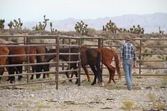 2015-08-30 Cold Creek Horses (21)