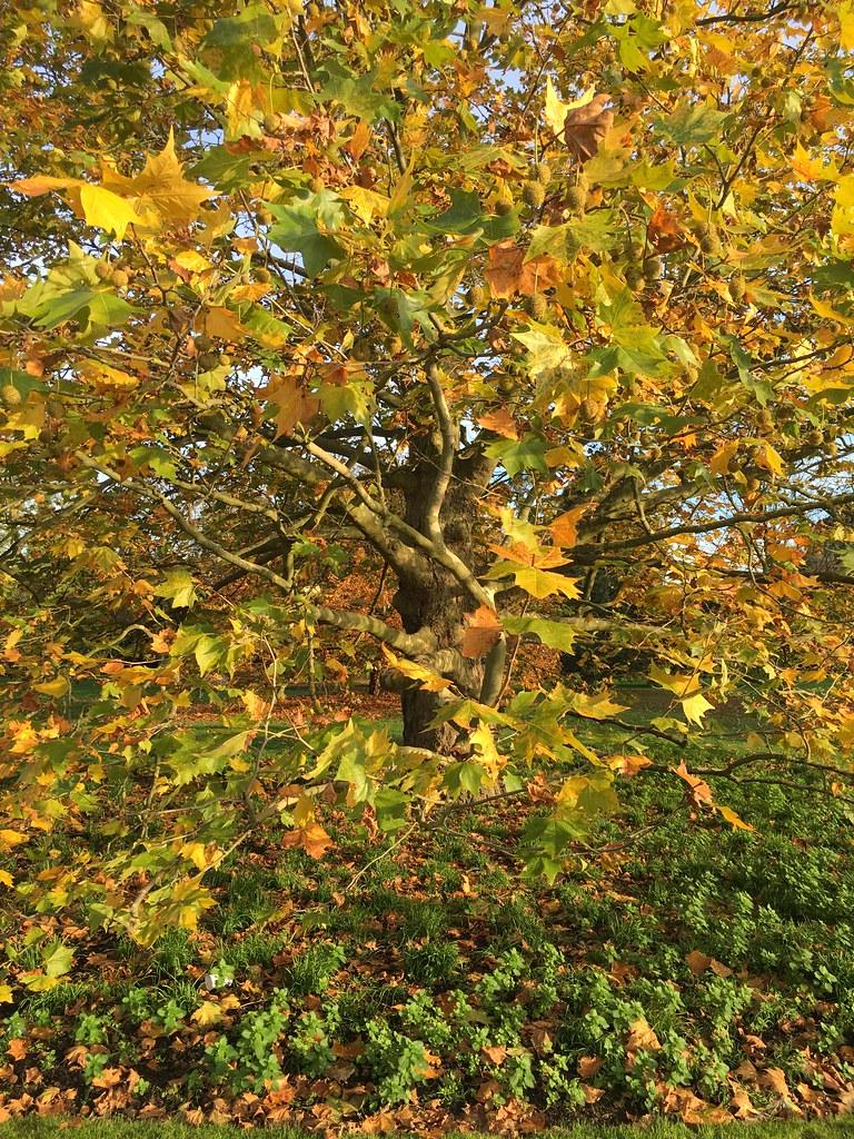 Autumn / Fall 2015 at Kew Gardens, Richmond, London | Flickr