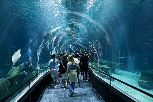 AquaRio, The largest Marine Aquarium in South America, Rio ...
