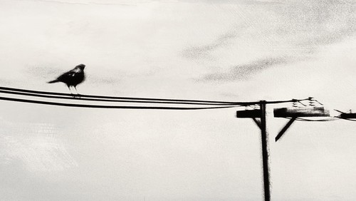 Bird On The Wire | by miu x 3