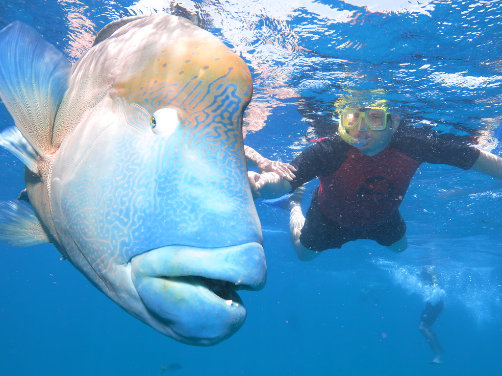 Phil with a Grouper (Norman Reef - Great Barrier Reef)