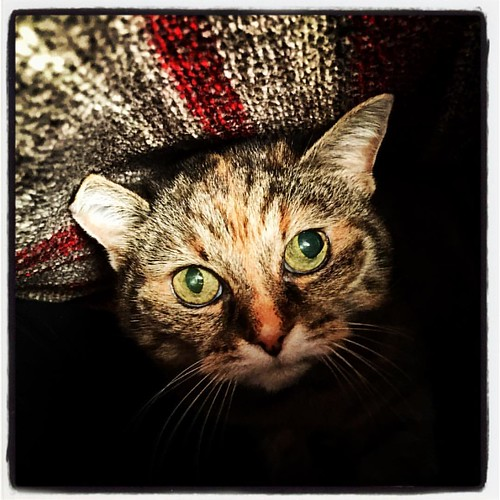 Cat in a blanket! | by jason.brooks