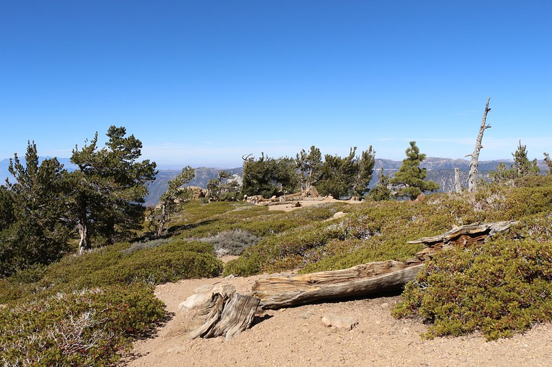 View north along the ridge at Limber Pine Bench