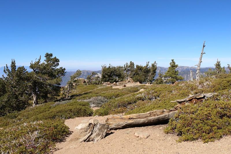 View north along the ridge at Limber Pine Bench