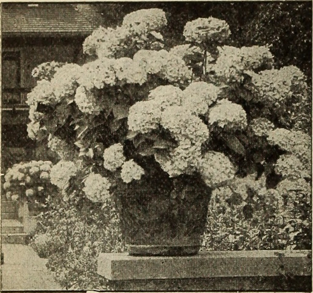 Image from page 57 of \