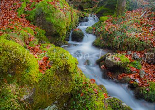 Parque Natural de #Gorbeia #DePaseoConLarri #Flickr      -1945