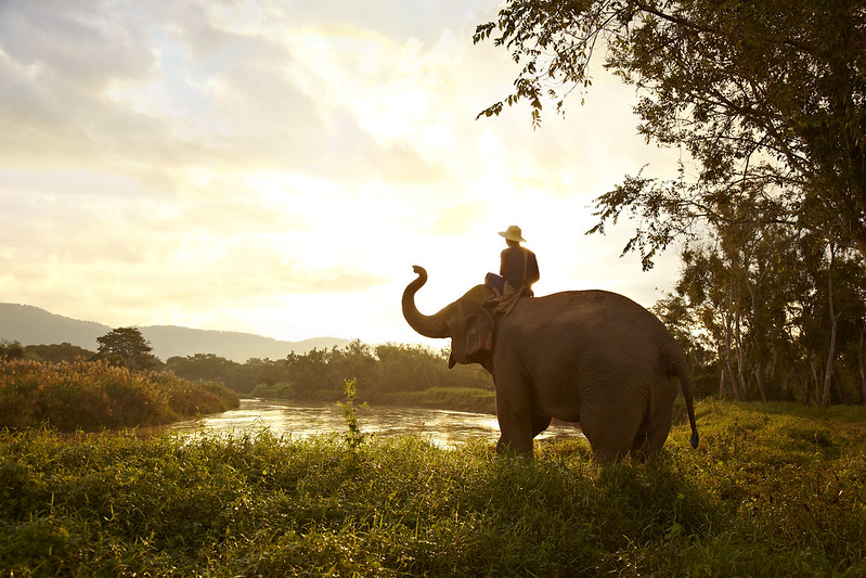 Elephant at Anantara Golden Triangle Resort and Spa