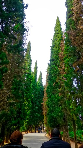 Conifer Path | by krossbow