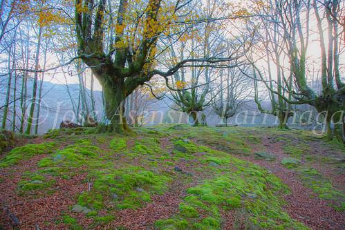 Parque Natural de Gorbeia #DePaseoConLarri #Flickr      -2828