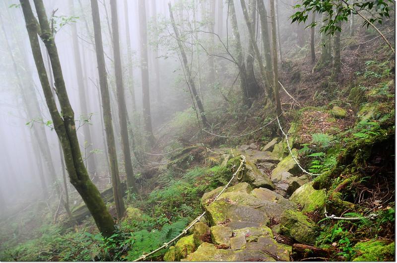 橫嶺山登山步道 4
