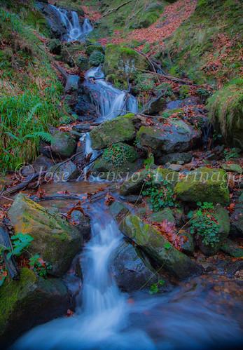 Parque Natural de Gorbeia   #DePaseoConLarri #Flickr      -2779