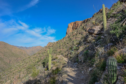 Phoneline Trail, Sabino Canyon Recreation Area