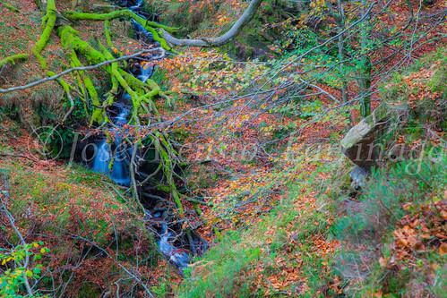 Parque natural de Gorbeia #DePaseoConLarri #Flickr      -2061