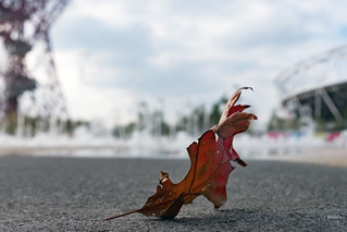 leaf in the park | stratford | london | by John FotoHouse