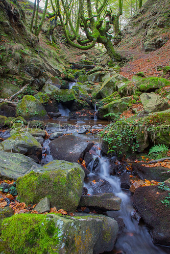 Parque Natural de #Gorbeia #DePaseoConLarri #Flickr      -1465
