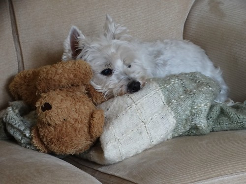 Daisy loves her teddy bear ... | by bazzadarambler