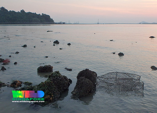 Fish trap on Pulau Sekudu