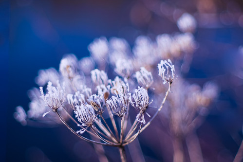 Icy beauty | by Karsten Gieselmann