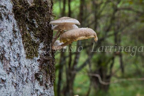 Parque Natural de #Gorbeia #DePaseoConLarri #Flickr      -1355