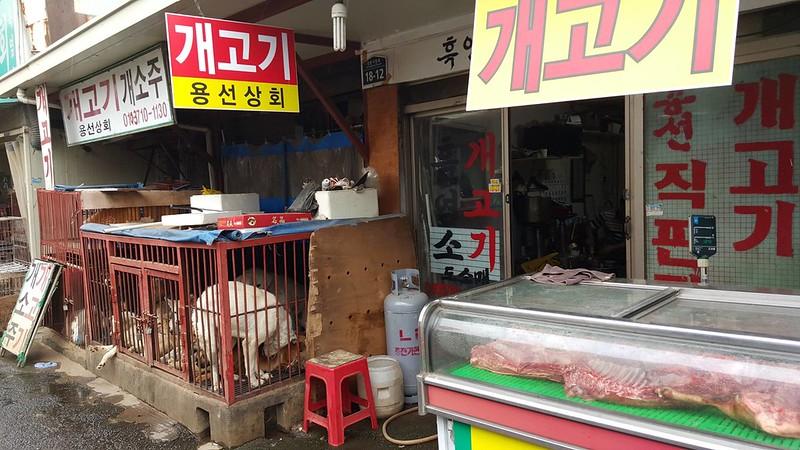 Seoul Gyeongdong dog meat market
