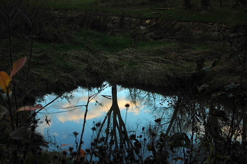 pond / 2 | by Avalanche Looms