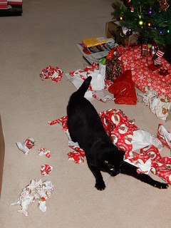 Flo enjoys the wrapping paper! (3) | by josiekitten