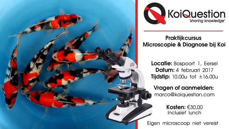 KoiQuestion biedt cursus 'Microscopie en Diagnose' aan!