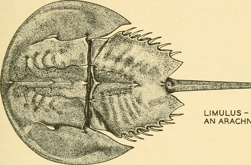Image From Page 40 Of Comparative Anatomy 1936 Flickr