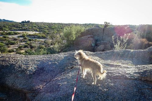Puppy Hike