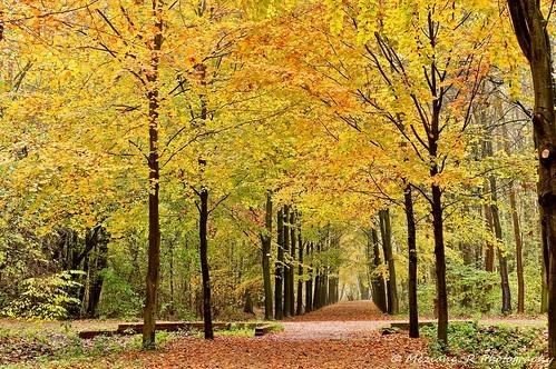 Forêt de Villeneuve d'Ascq ( Nord France )