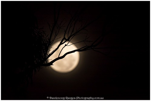 Supermoon behind tree | by kathiemt1