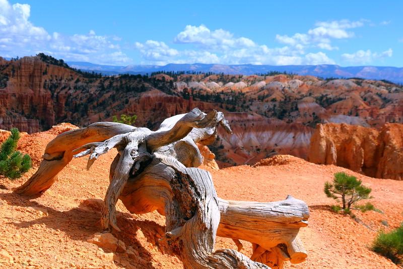 IMG_5422 Fairyland Trail, Bryce Canyon National Park