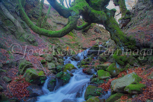 Parque Natural de Gorbeia   #DePaseoConLarri #Flickr      -2797