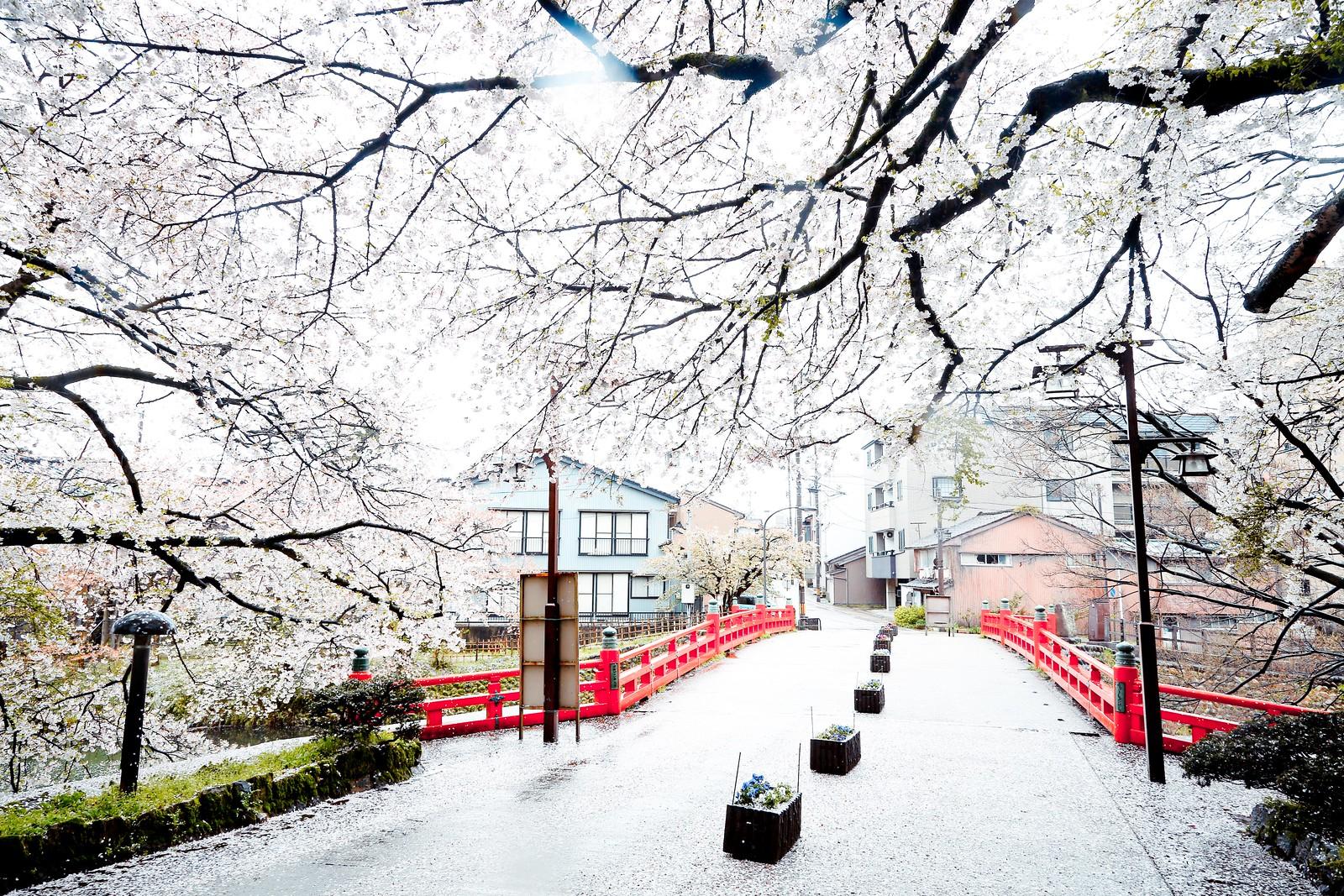 富山県 高岡古城公園 Takaokakojo Park