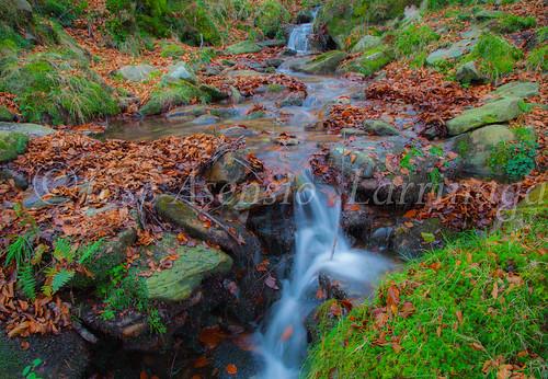 Parque natural de Gorbeia #DePaseoConLarri #Flickr      -2059