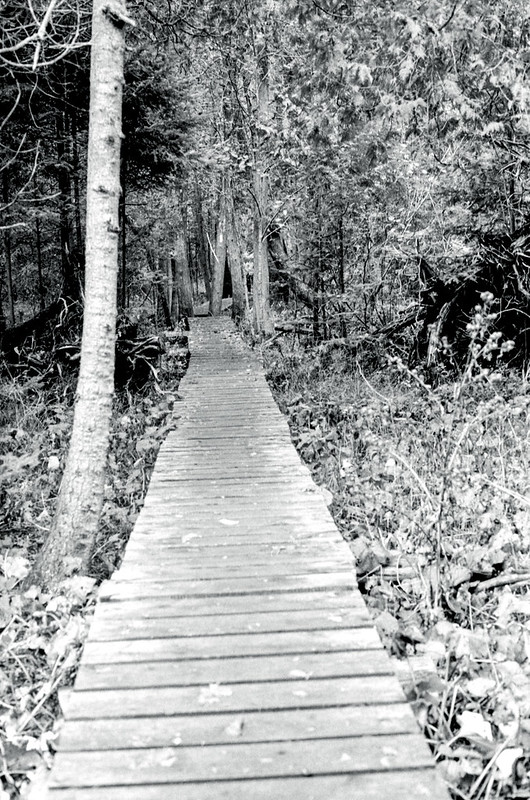 Wooden Path over the Mud