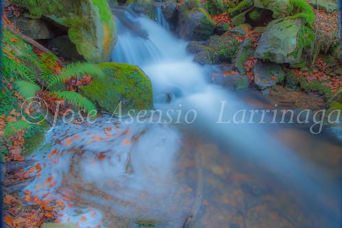 Parque Natural de Gorbeia   #DePaseoConLarri #Flickr      -2764