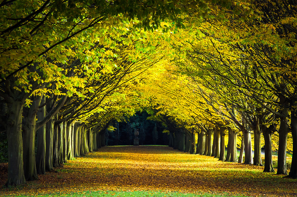 Attractive ... Tree Lined Avenue In Autumn, Anglesey Abbey Landscape Gardens,  Cambridge, UK | By