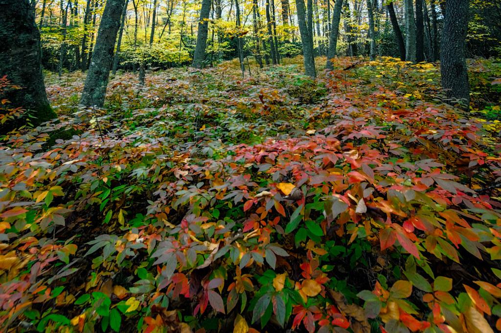 The undergrowth