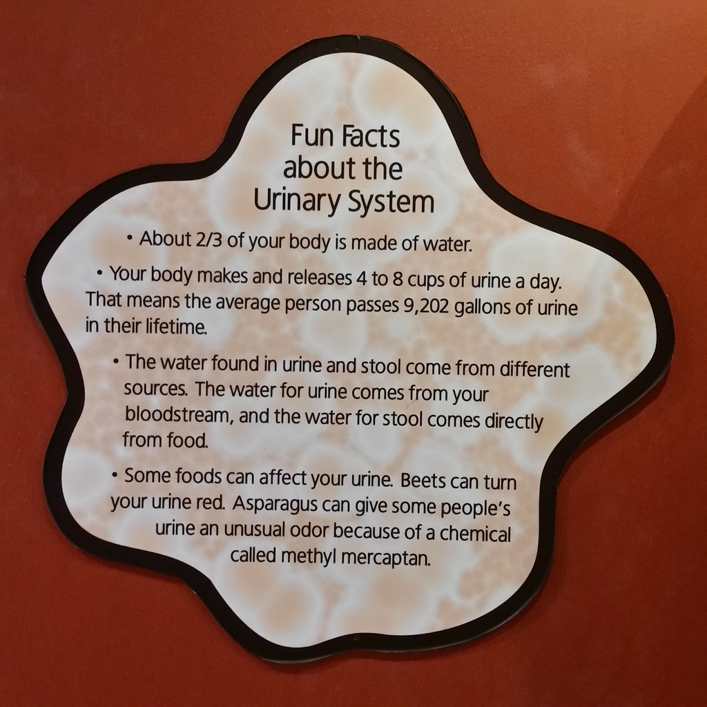 Fun Facts Fun Facts About The Urinary System Museum Of Sci Flickr
