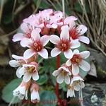 Uttarakhand Wild Flowers
